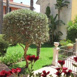 Casa Vacanze Sicily For You Apartment